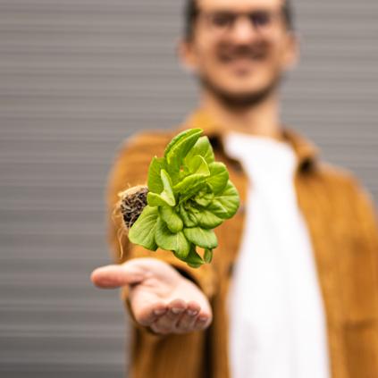 El futur dels aliments: Tot el que heu de saber sobre la agricultura vertical