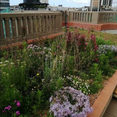 Bàsics per a la construcció de cobertes verdes
