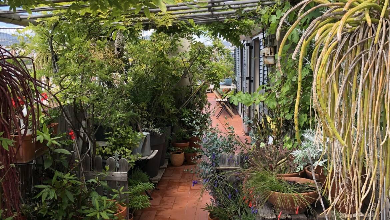 Viatge Botànic por una Selva Urbana al Born