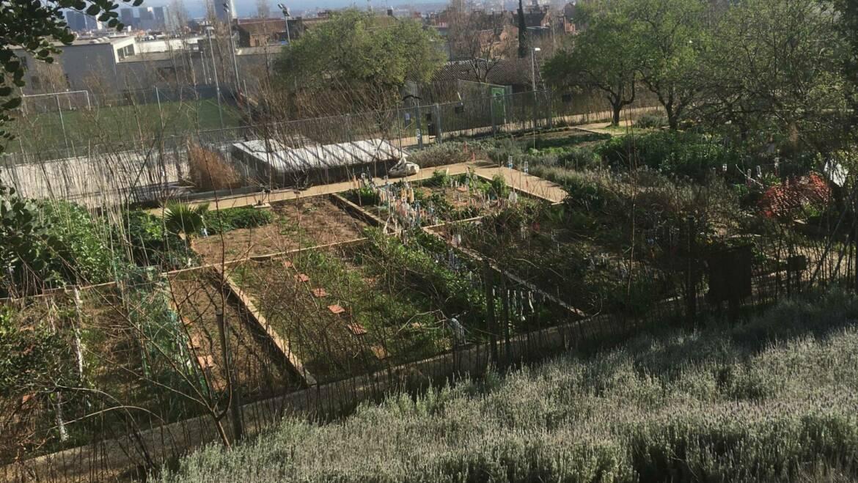 Hort Urbà comunitari Pla i Armengol