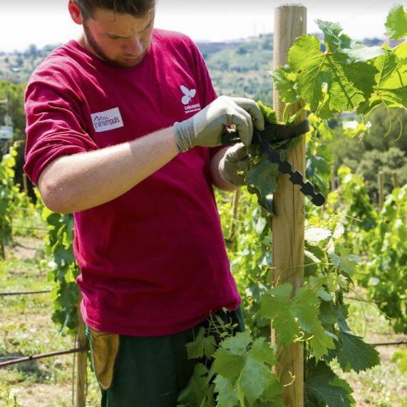 Visita a la vinya d'en Sabater