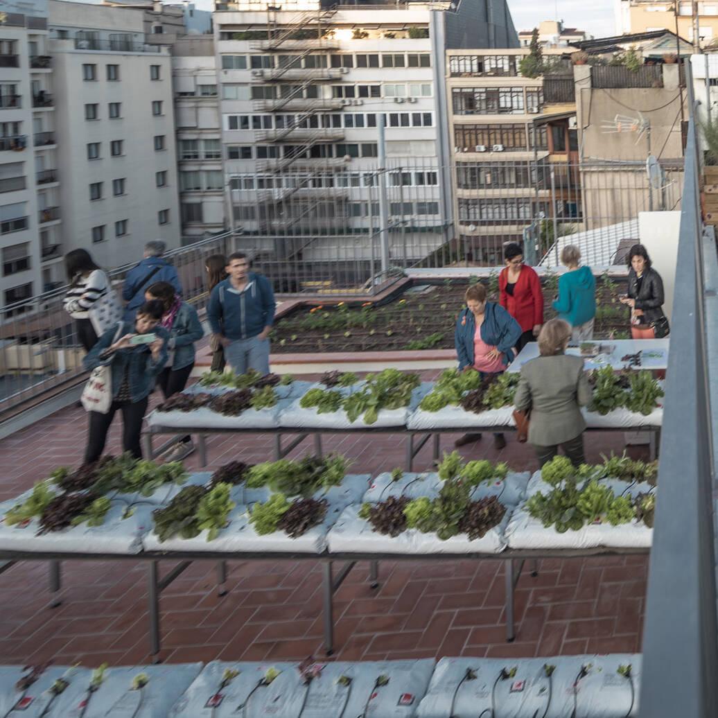 Coberta verda amb dos tipus d'horts urbans: tradicional i hidropònic!